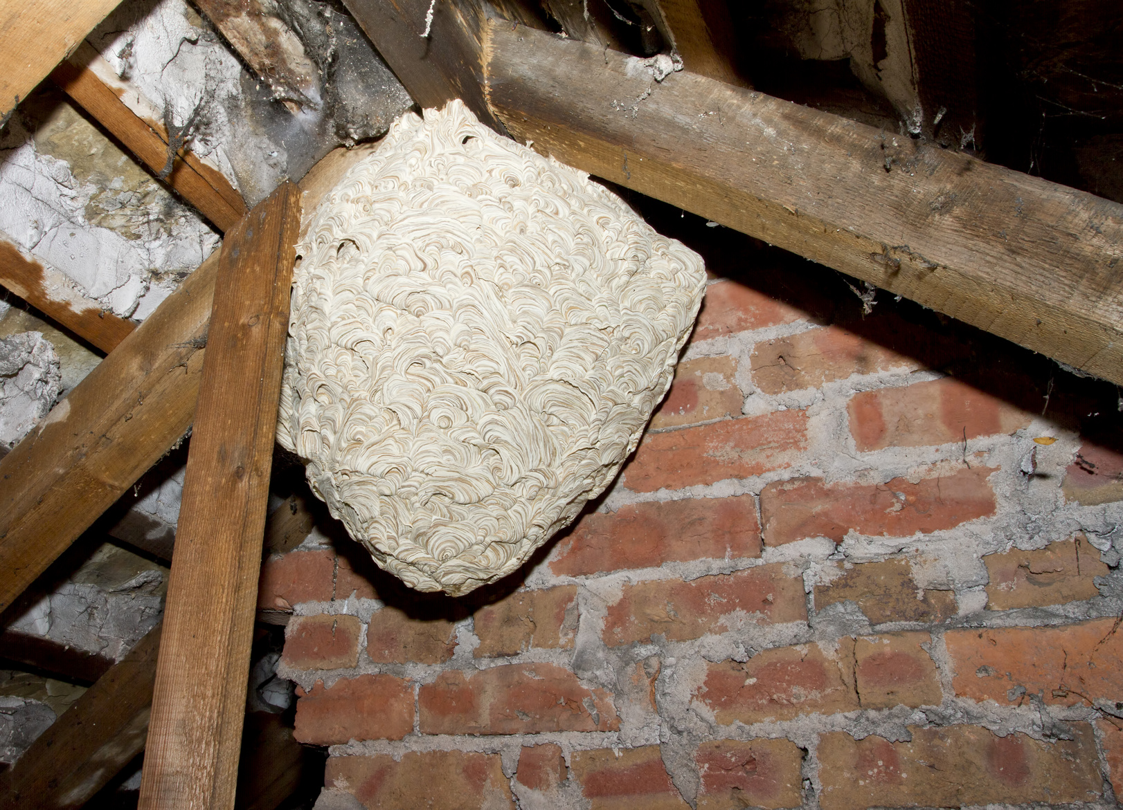 Wasp nest removal Wiltshire, Trowbridge, Bath, Somerset.