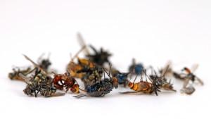 Leblose Insekten