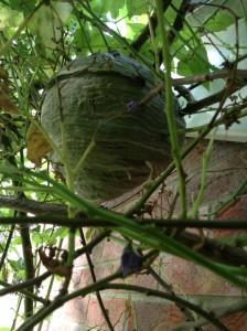Wasp control Wiltshire