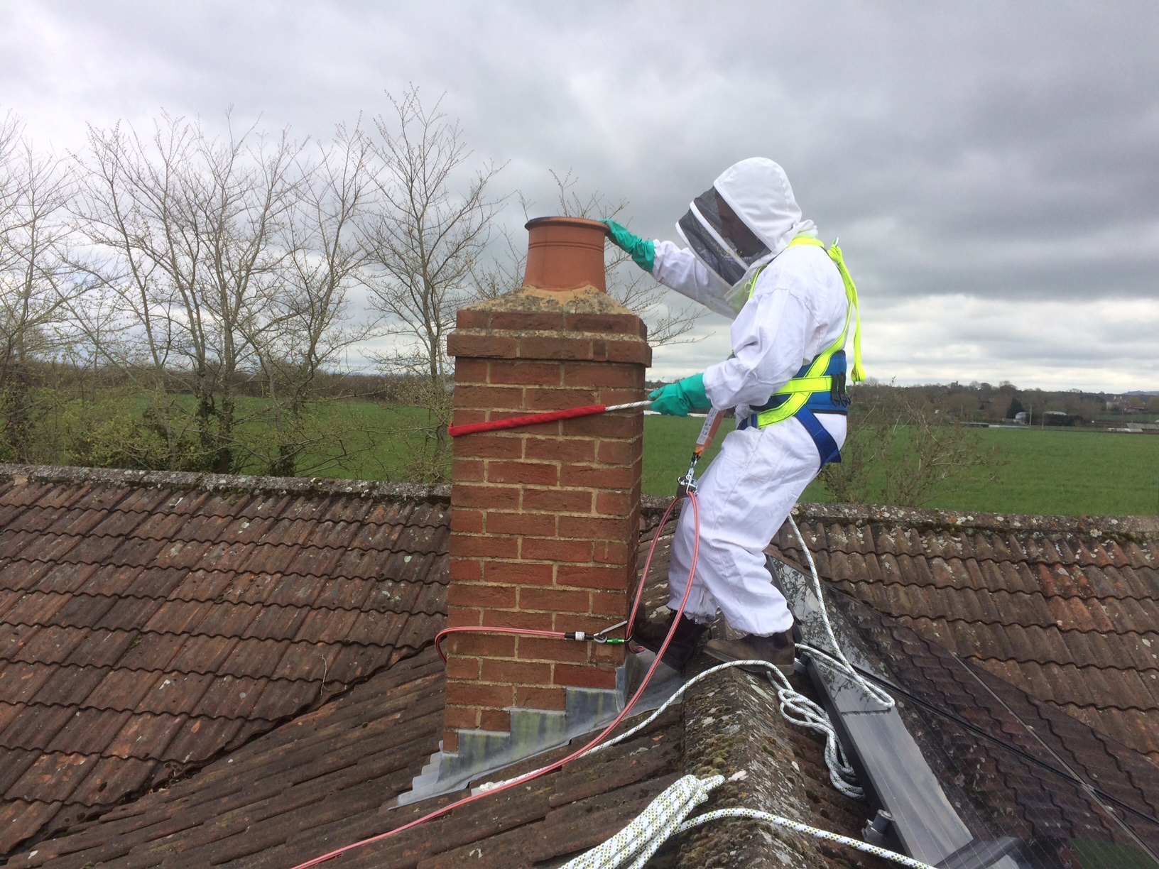Bee removal Wiltshire
